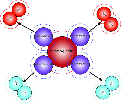 How does oxygen bind to heme